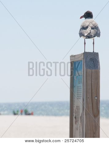 PERDIDO KEY, FL - JUNE 9: A seagull watches as BP oil spill workers (background) clean the beaches on June 9, 2010 as oil threatens the Gulf Shores National Seashore near Pensacola, FL.