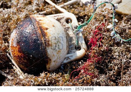 ORANGE BEACH, AL - JUNE 10:  Thick oil has collected on a beached buoy nestled in tainted seawood as oil washes ashore on June 10, 2010 at Perdido Pass, AL.