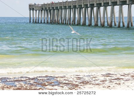 PENSACOLA BEACH - JUNE 23:  Seagulls soar over oil stained beaches in Pensacola, FL on June 23, 2010 as BP oil spill sheen washes ashore at the resort area.