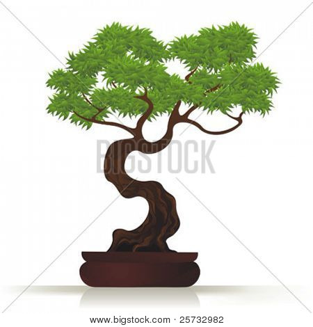 Tree Bonsai