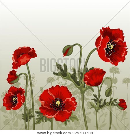 Ornate vector background with red poppies