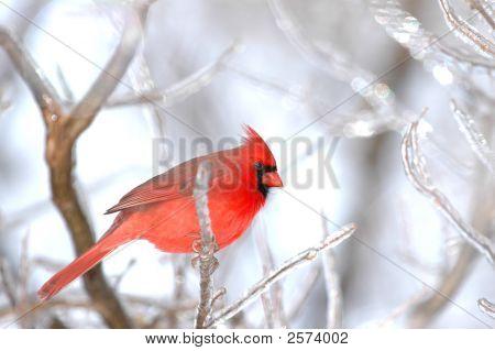 Pájaro de invierno