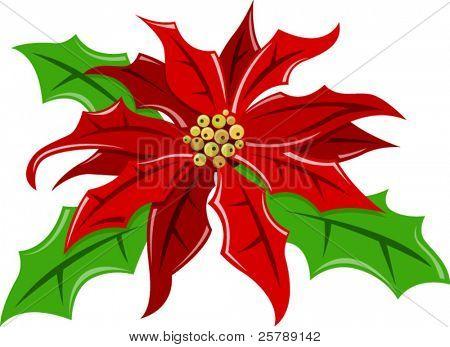 Vector Illustration of a Poinsettia