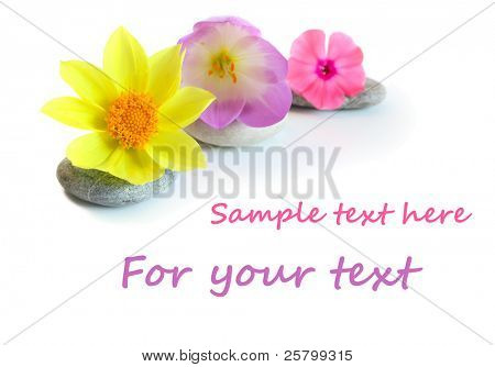 Flowers and stones, isolated on white