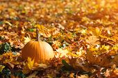 Orange Pumpkin On Autumn Leaves Background. Autumn Card With Pumpkin. Golden Autumn. Autumn Mood. Pu poster