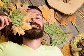Man With Beard And Mustache Enjoy Season Hold Autumn Dry Leaves. Fall Atmosphere Attributes. Man Bea poster