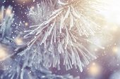Christmas Background. Xmas Theme. Christmas Tree Branch With Hoarfrost Closeup And Festive Lights Wi poster