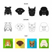 Muzzle Of Different Breeds Of Dogs.collie Breed Dog, Lobladore, Poodle, Boxer Set Collection Icons I poster
