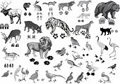 illustration with animals and its tracks isolated on white