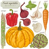 Fresh vector vegetables