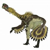 Citipati Dinosaur Tail 3d Illustration - Citipati Was A Carnivorous Velociraptor Dinosaur That Lived poster