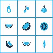 Vegetable Icons Colored Set With Coco, Barberry, Watermelon And Other Garlic Elements. Isolated  Ill poster