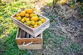 Orange In The Box Is Not Stored. And Orange In The Citrus Garden, Ready To Be Released For Consumpti poster
