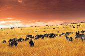 stock photo of wildebeest  - African landscape - JPG