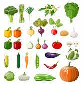 Big Vegetable Isolated Icon Set. Onion, Eggplant, Cabbage, Pepper, Pumpkin, Cucumber, Tomato Carrot  poster
