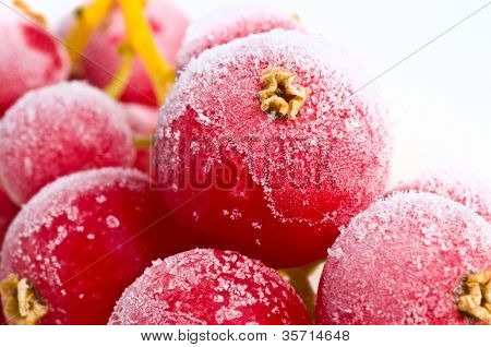 fresh frozen fruit in ice.