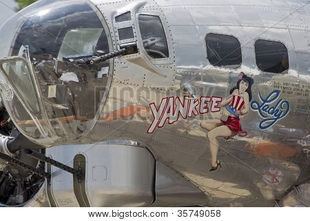 Yankee Lady Close Up