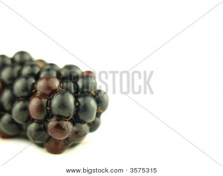 Blackberry Very Close And Wildberry In Zoom