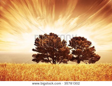 Lonely old trees, grunge autumn background, warm orange sunlight, big dry oak tree on wheat field over sunset, South Africa view, rural meadow, autumnal countryside scenery, wood over cloudy sky