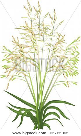 illustration with green grass isolated on white background