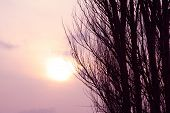 The Sun Hiding In The Dead Winter Sky poster