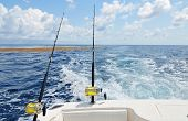 picture of mahi  - Trolling in the Gulf of Mexico off the coast of Destin - JPG