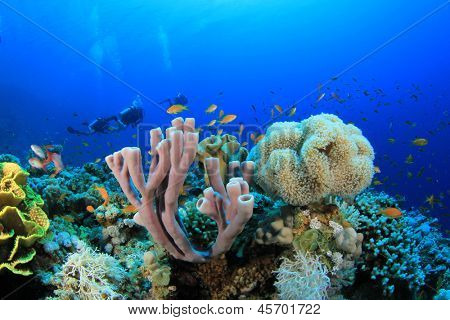 Scuba Diving over Coral Reef with Fish underwater in ocean