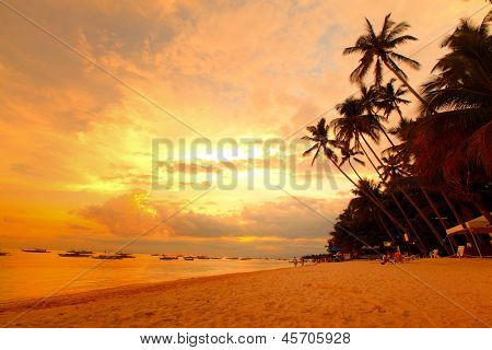 Tropical beach with palm trees. Philippines, Panglao island