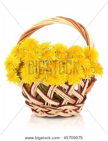 Dandelion flowers in wicker basket isolated on white