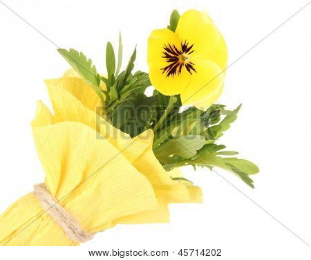 Beautiful pansy flower isolated on white