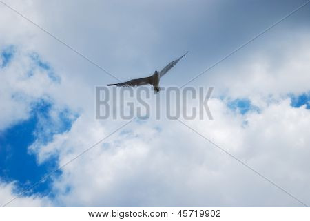 flying bird in sky background. Cloudscape