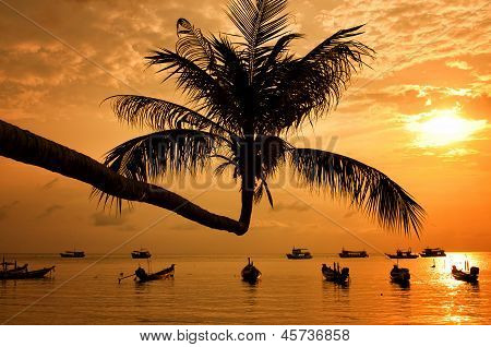 Sunset With Palm And Boats On Tropical Beach