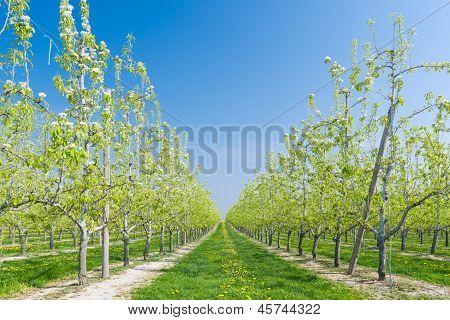Fruit orchard