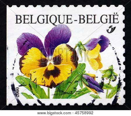 Postage Stamp Belgium 2000 Violets, Pansy, Flowering Plant