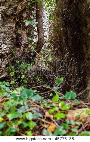 Jungle Passage