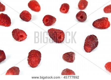Raspberries Limbo Background
