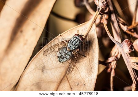 Fly On Dead Leaf