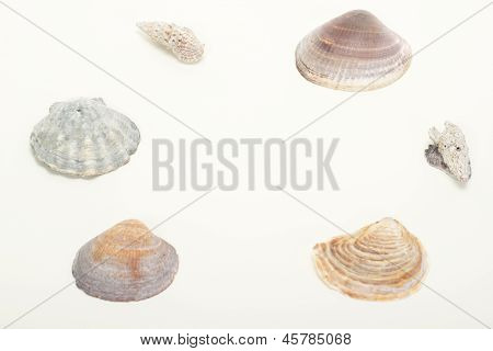Beautiful Seashells With Free Space For Text