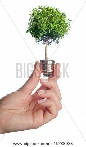 Tree growing out of electric light bulb.