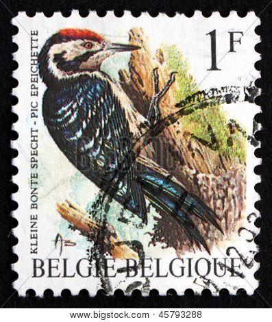 Postage Stamp Belgium 1990 Lesser Spotted Woodpecker, Bird