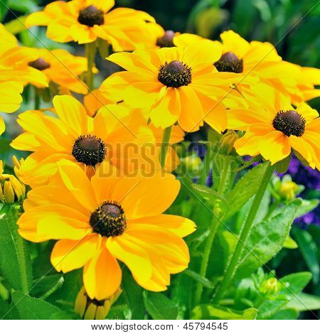 Background Of Yellow Daisies