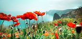 pic of opium  - meadow with red poppy flowers against sky and sea - JPG