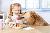 foto of feeding  - Little girl feeding dog from her own plate by fork - JPG