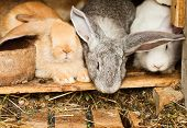 picture of rabbit hutch  - Three different rabbits closeup in hutch close up - JPG