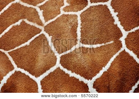 Giraffe Fur Background