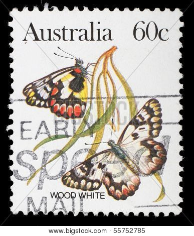 AUSTRALIA - CIRCA 1981: A stamp printed in Australia shows a Wood white butterfly, circa 1981.
