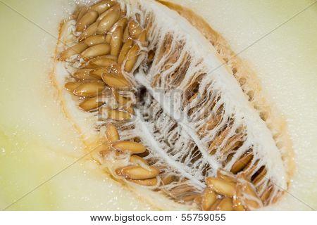 Honeydew (macro Shot)