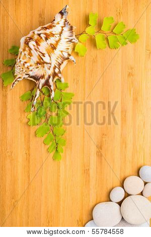 Green Branches, Shell And Pebbles On Wooden  Background