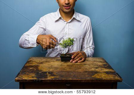 Happy Man Pruning His Bonsai Tree