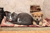 image of stray dog  - Homeless cat and dog on the rag - JPG